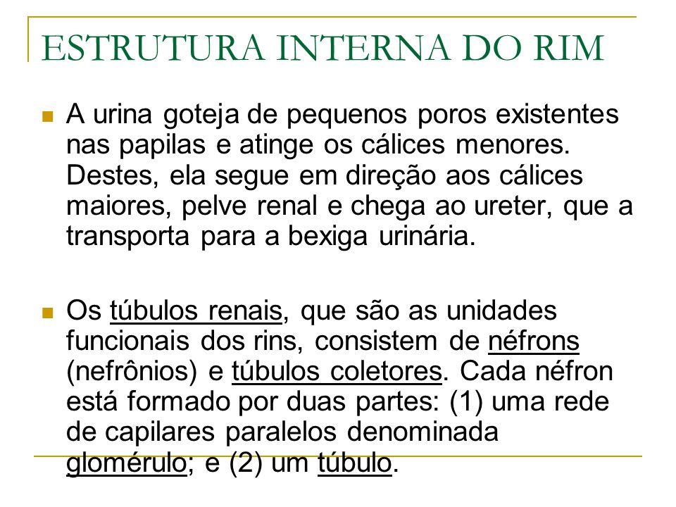 ESTRUTURA INTERNA DO RIM A urina goteja de pequenos poros existentes nas papilas e atinge os cálices menores.