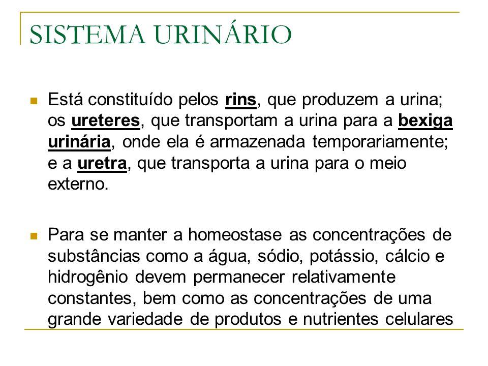 SISTEMA URINÁRIO Está constituído pelos rins, que produzem a urina; os ureteres, que transportam a urina para a bexiga urinária, onde ela é armazenada temporariamente; e a uretra, que transporta a urina para o meio externo.