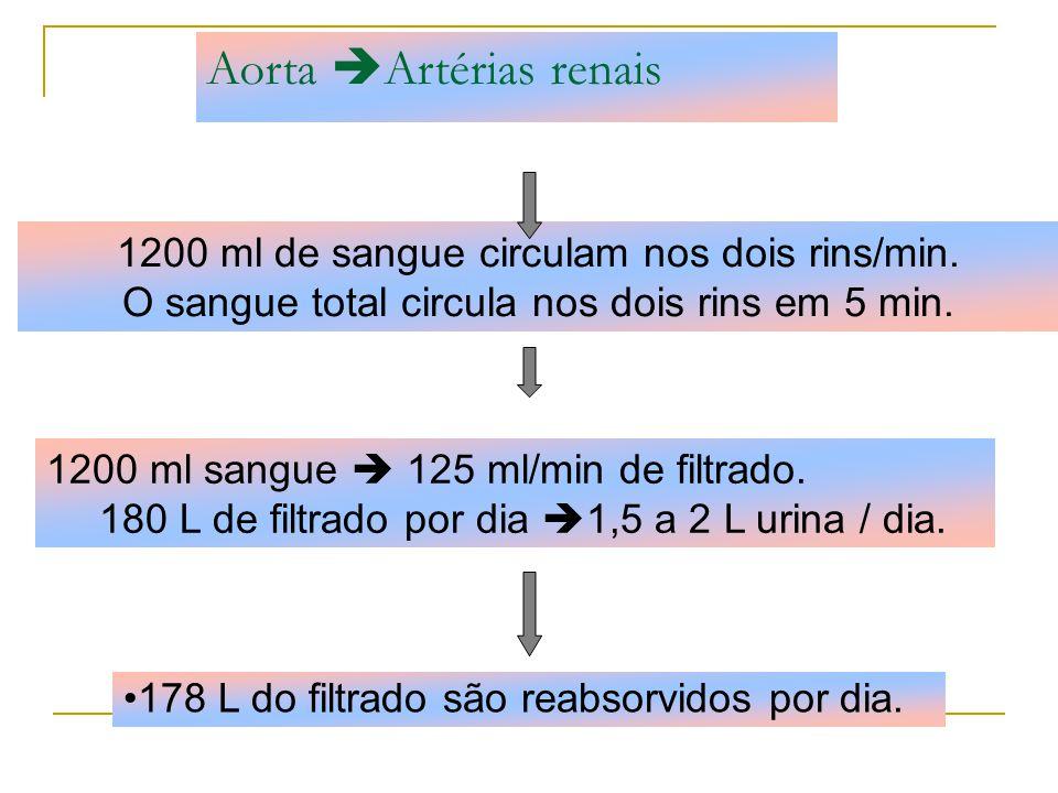 Aorta Artérias renais 1200 ml de sangue circulam nos dois rins/min.