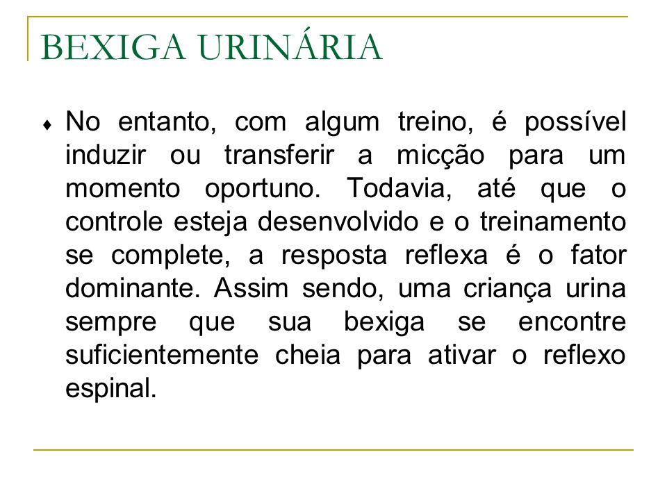 BEXIGA URINÁRIA No entanto, com algum treino, é possível induzir ou transferir a micção para um momento oportuno.