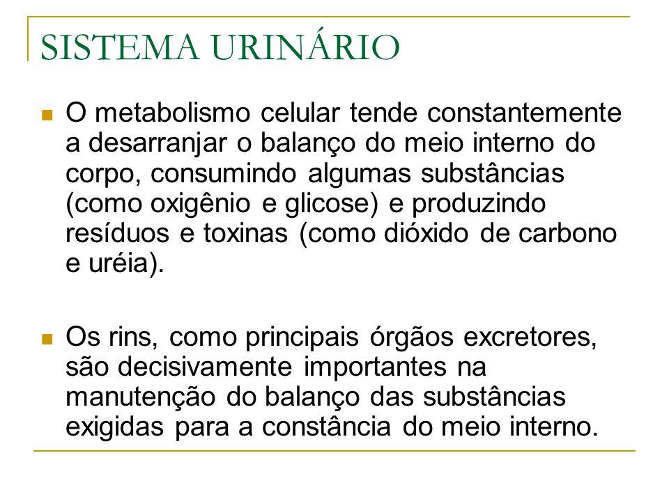 SISTEMA URINÁRIO O metabolismo celular tende constantemente a desarranjar o balanço do meio interno do corpo, consumindo algumas substâncias (como oxigênio e glicose) e produzindo resíduos e toxinas (como dióxido de carbono e uréia).