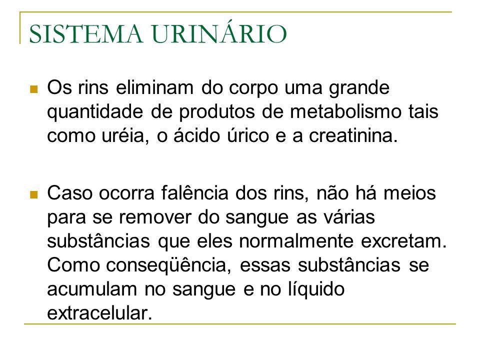 URINA Quando a reabsorção e secreção são completados, o líquido remanescente nos túbulos renais e transportado para os outros componentes do sistema urinário para ser excretado como urina.