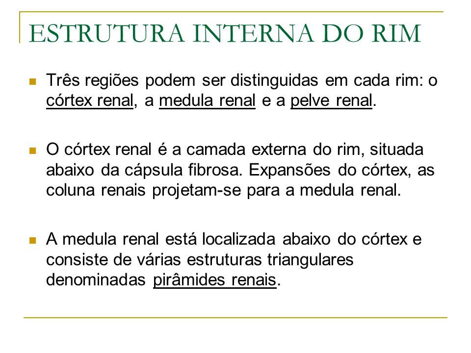 ESTRUTURA INTERNA DO RIM Três regiões podem ser distinguidas em cada rim: o córtex renal, a medula renal e a pelve renal.