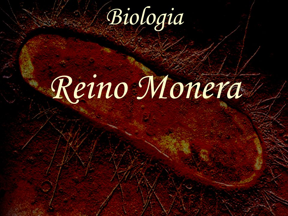 Biologia Reino Monera