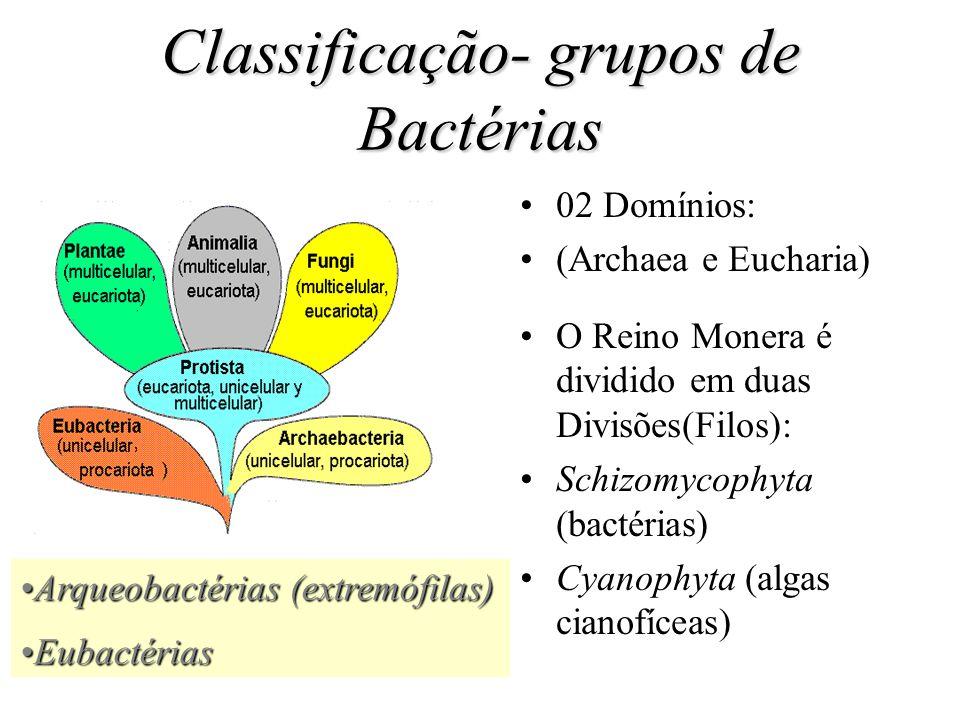 Classificação- grupos de Bactérias 02 Domínios: (Archaea e Eucharia) O Reino Monera é dividido em duas Divisões(Filos): Schizomycophyta (bactérias) Cyanophyta (algas cianofíceas) Arqueobactérias (extremófilas)Arqueobactérias (extremófilas) EubactériasEubactérias