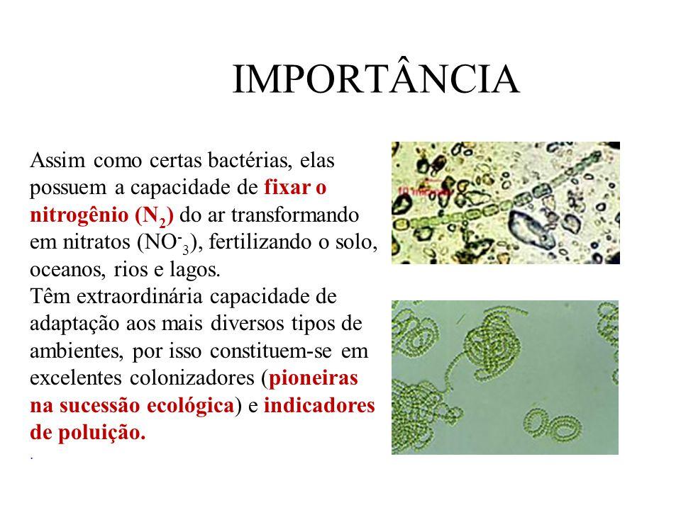 IMPORTÂNCIA Assim como certas bactérias, elas possuem a capacidade de fixar o nitrogênio (N 2 ) do ar transformando em nitratos (NO - 3 ), fertilizando o solo, oceanos, rios e lagos.