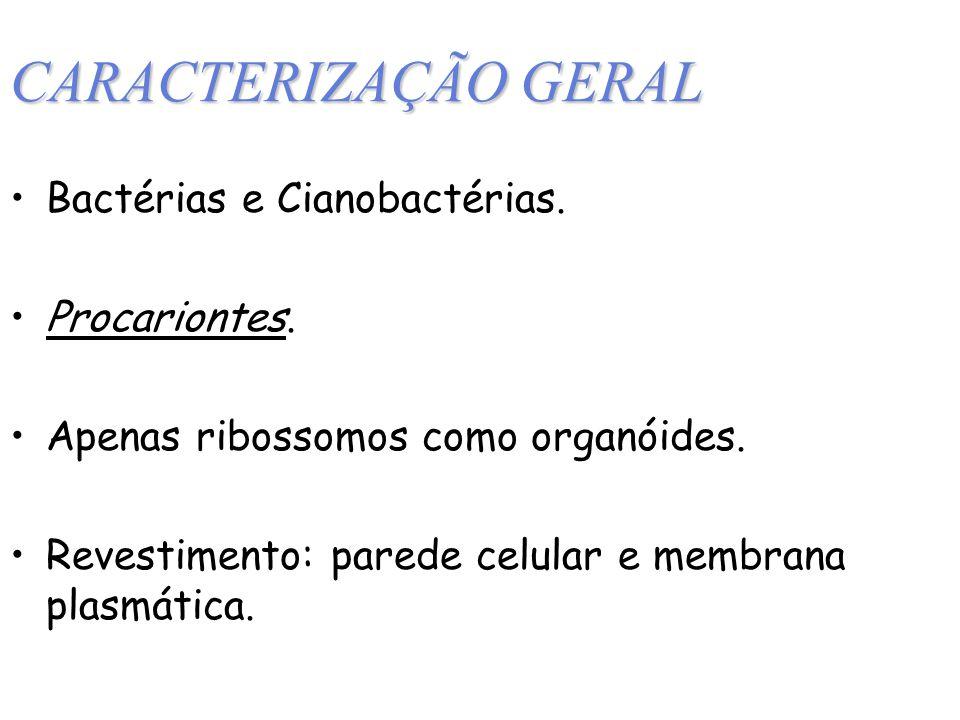 CARACTERIZAÇÃO GERAL Bactérias e Cianobactérias.Procariontes.