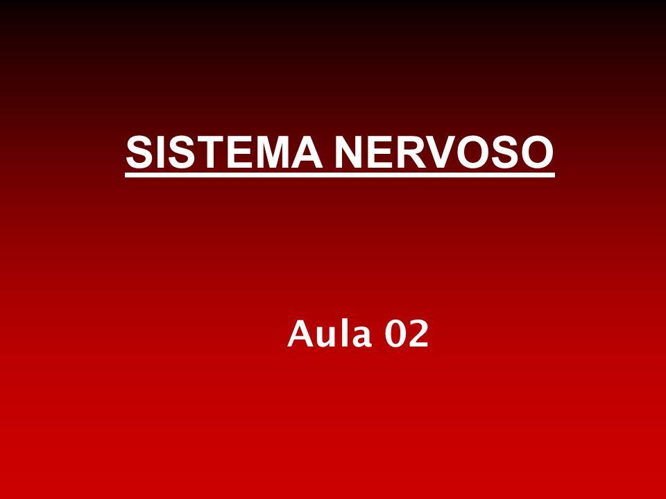 NEUROTRANSMISSORES Ácido glutâmico ou glutamato: principal neurotransmissor estimulador do SNC.