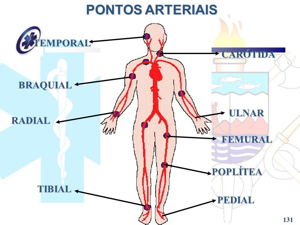 Lujo Arteria Braquial Fotos - Anatomía de Las Imágenesdel Cuerpo ...