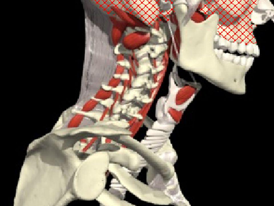 PARADA CARDÍACA É o cessar da atividade mecânica do coração.