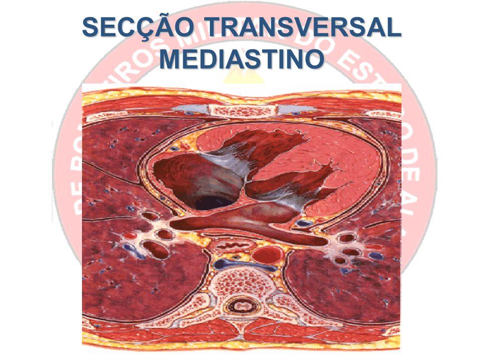SECÇÃO TRANSVERSAL MEDIASTINO