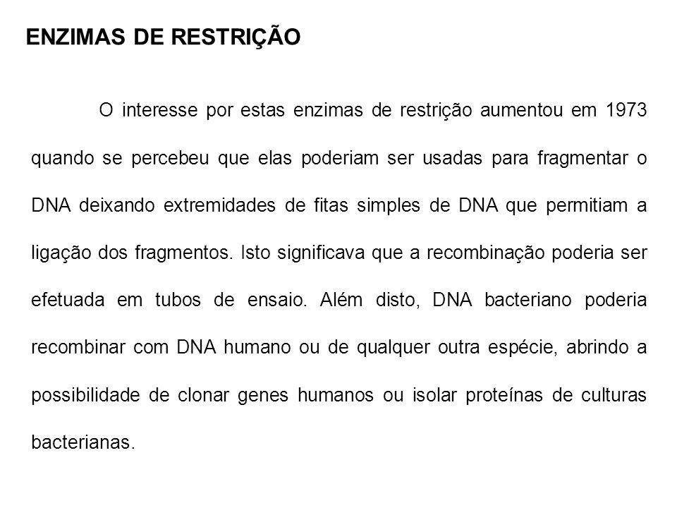 ENZIMAS DE RESTRIÇÃO O interesse por estas enzimas de restrição aumentou em 1973 quando se percebeu que elas poderiam ser usadas para fragmentar o DNA