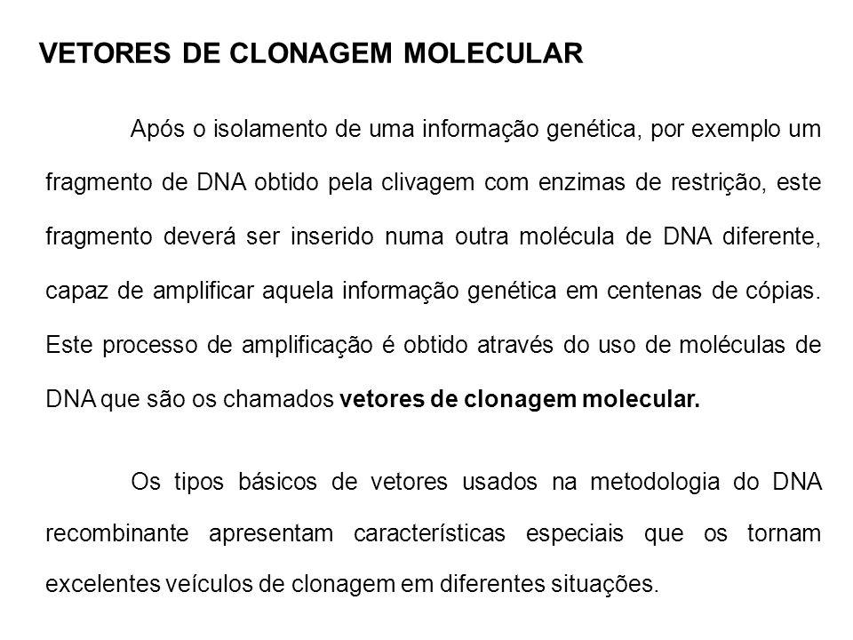 Após o isolamento de uma informação genética, por exemplo um fragmento de DNA obtido pela clivagem com enzimas de restrição, este fragmento deverá ser