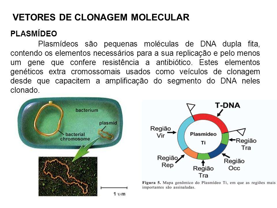 VETORES DE CLONAGEM MOLECULAR PLASMÍDEO Plasmídeos são pequenas moléculas de DNA dupla fita, contendo os elementos necessários para a sua replicação e