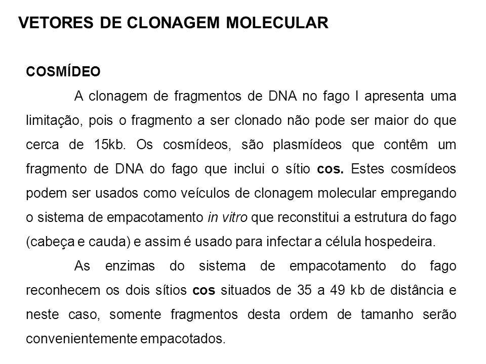 COSMÍDEO A clonagem de fragmentos de DNA no fago l apresenta uma limitação, pois o fragmento a ser clonado não pode ser maior do que cerca de 15kb. Os
