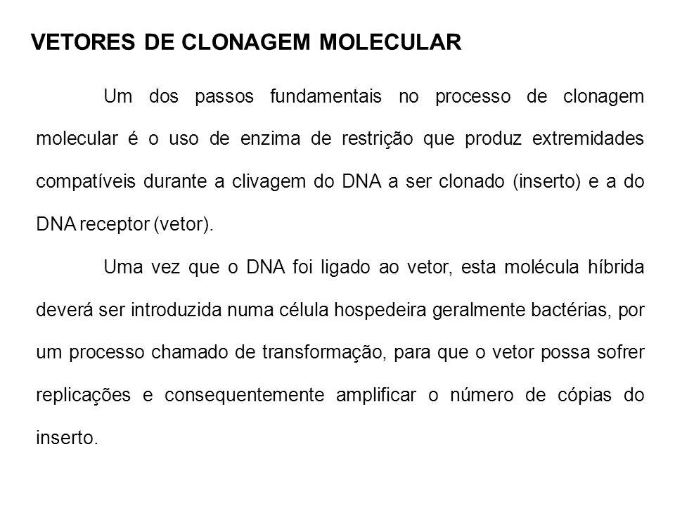 Um dos passos fundamentais no processo de clonagem molecular é o uso de enzima de restrição que produz extremidades compatíveis durante a clivagem do