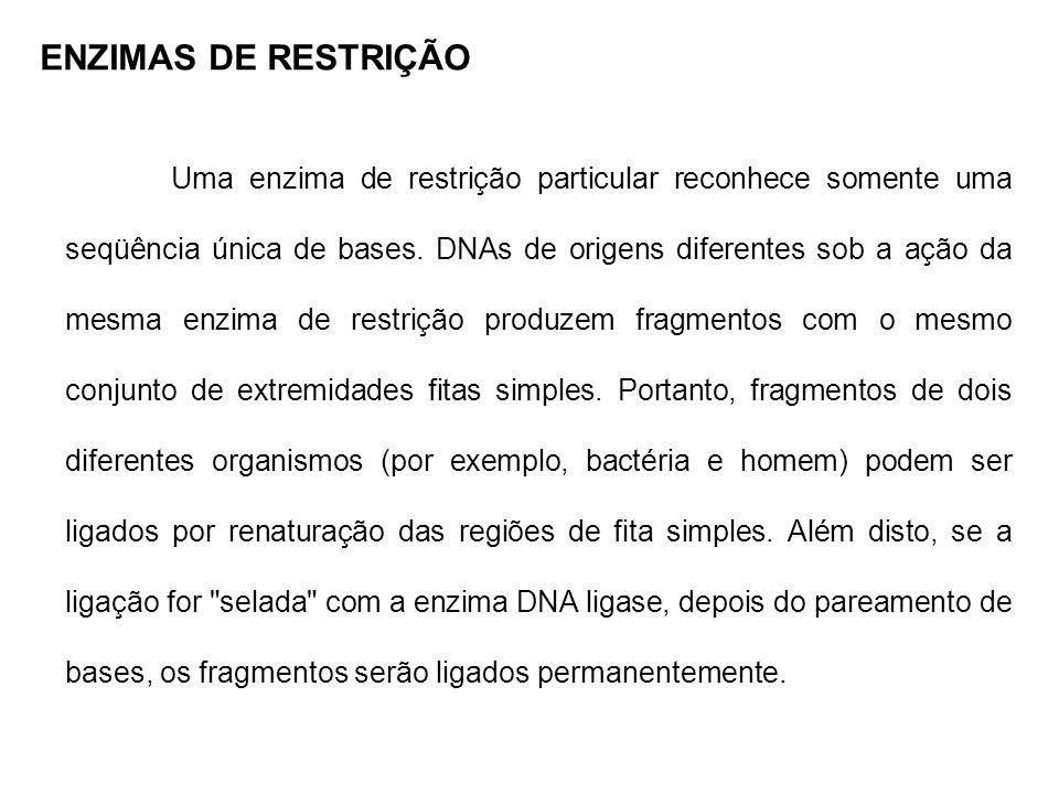 Uma enzima de restrição particular reconhece somente uma seqüência única de bases. DNAs de origens diferentes sob a ação da mesma enzima de restrição