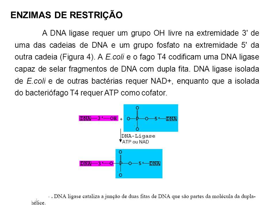 Após o isolamento de uma informação genética, por exemplo um fragmento de DNA obtido pela clivagem com enzimas de restrição, este fragmento deverá ser inserido numa outra molécula de DNA diferente, capaz de amplificar aquela informação genética em centenas de cópias.