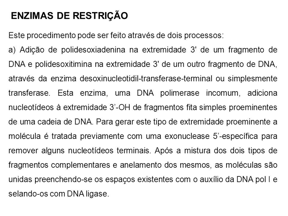 Este procedimento pode ser feito através de dois processos: a) Adição de polidesoxiadenina na extremidade 3' de um fragmento de DNA e polidesoxitimina