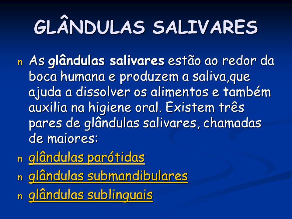 GLÂNDULAS SALIVARES n As glândulas salivares estão ao redor da boca humana e produzem a saliva,que ajuda a dissolver os alimentos e também auxilia na