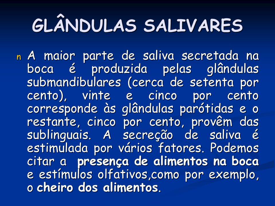 GLÂNDULAS SALIVARES n A maior parte de saliva secretada na boca é produzida pelas glândulas submandibulares (cerca de setenta por cento), vinte e cinc