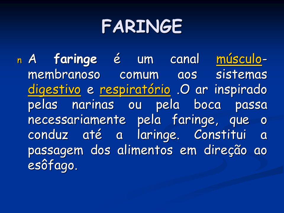 FARINGE n A faringe é um canal músculo- membranoso comum aos sistemas digestivo e respiratório.O ar inspirado pelas narinas ou pela boca passa necessa