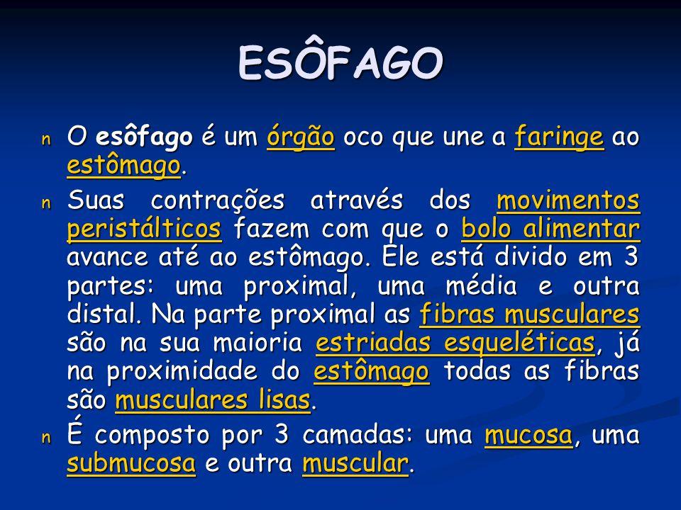 ESÔFAGO n O esôfago é um órgão oco que une a faringe ao estômago. órgãofaringe estômagoórgãofaringe estômago n Suas contrações através dos movimentos