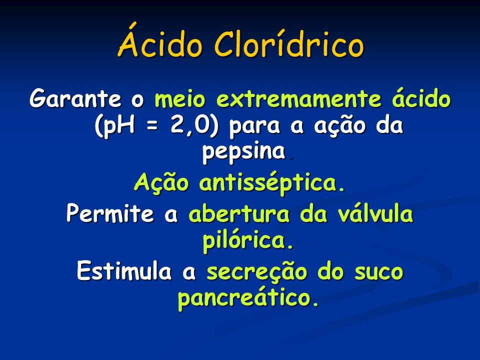 Ácido Clorídrico Garante o meio extremamente ácido (pH = 2,0) para a ação da pepsina. Ação antisséptica. Permite a abertura da válvula pilórica. Estim