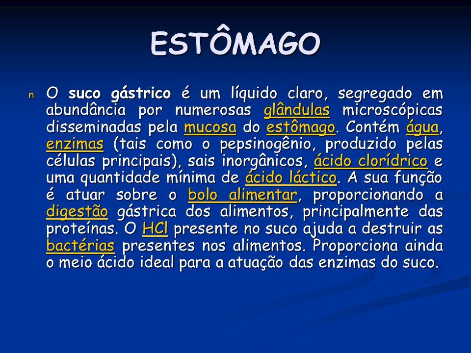 ESTÔMAGO n O suco gástrico é um líquido claro, segregado em abundância por numerosas glândulas microscópicas disseminadas pela mucosa do estômago. Con