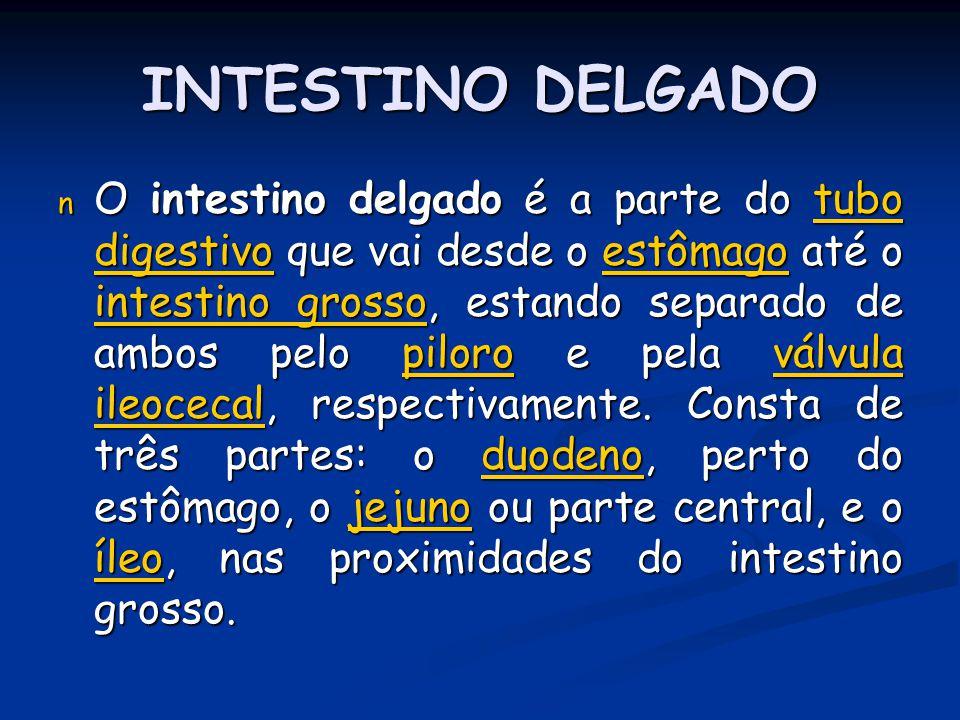 INTESTINO DELGADO n O intestino delgado é a parte do tubo digestivo que vai desde o estômago até o intestino grosso, estando separado de ambos pelo pi