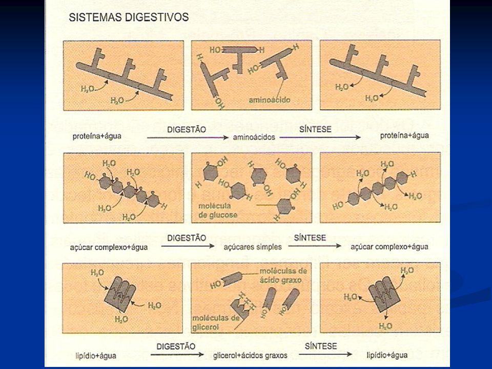 Tipos de digestão Intracelular – fusão de lisossomos com vesículas resultantes do englobamento de partículas pelas células Extracelular – ocorre geralmente no interior de uma cavidade digestiva, a qual permite ao ser vivo ingerir partículas alimentares maiores