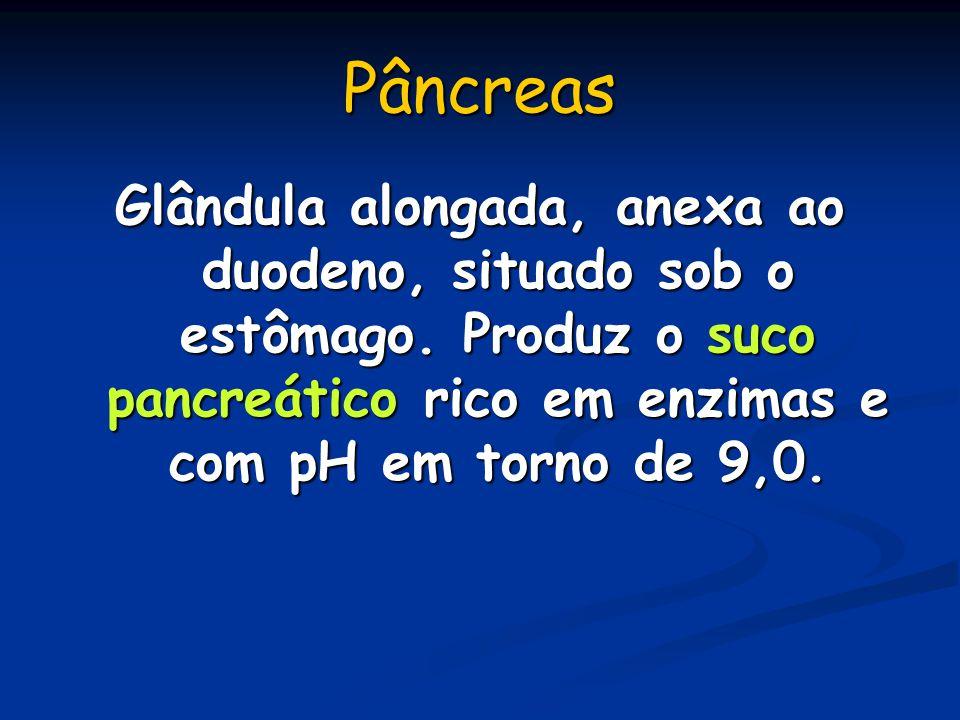 Pâncreas Glândula alongada, anexa ao duodeno, situado sob o estômago. Produz o suco pancreático rico em enzimas e com pH em torno de 9,0.