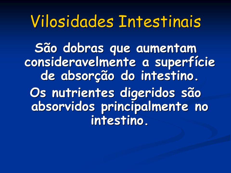 Vilosidades Intestinais São dobras que aumentam consideravelmente a superfície de absorção do intestino. Os nutrientes digeridos são absorvidos princi