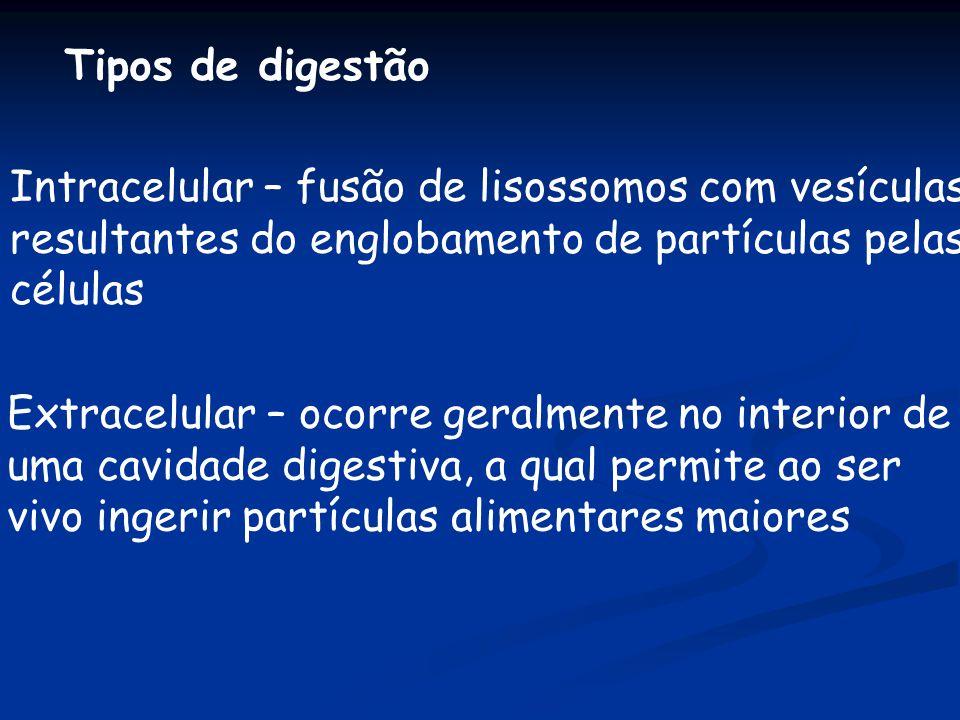 Tipos de digestão Intracelular – fusão de lisossomos com vesículas resultantes do englobamento de partículas pelas células Extracelular – ocorre geral