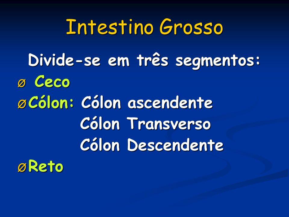 Intestino Grosso Divide-se em três segmentos: Ø Ceco Ø Cólon: Cólon ascendente Cólon Transverso Cólon Transverso Cólon Descendente Cólon Descendente Ø