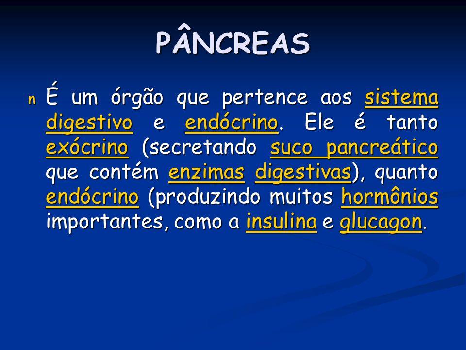 PÂNCREAS n É um órgão que pertence aos sistema digestivo e endócrino. Ele é tanto exócrino (secretando suco pancreático que contém enzimas digestivas)