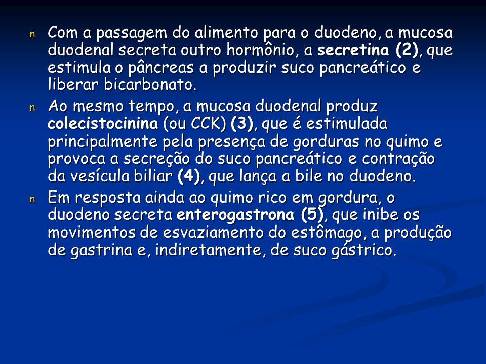 n Com a passagem do alimento para o duodeno, a mucosa duodenal secreta outro hormônio, a secretina (2), que estimula o pâncreas a produzir suco pancre