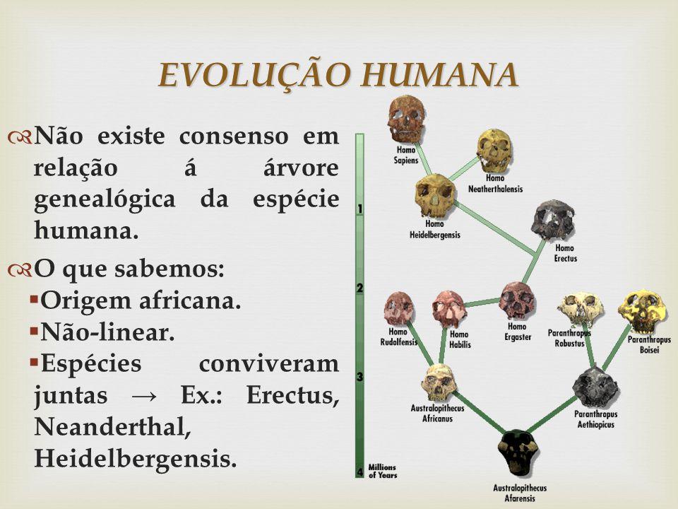 EVOLUÇÃO HUMANA Não existe consenso em relação á árvore genealógica da espécie humana.