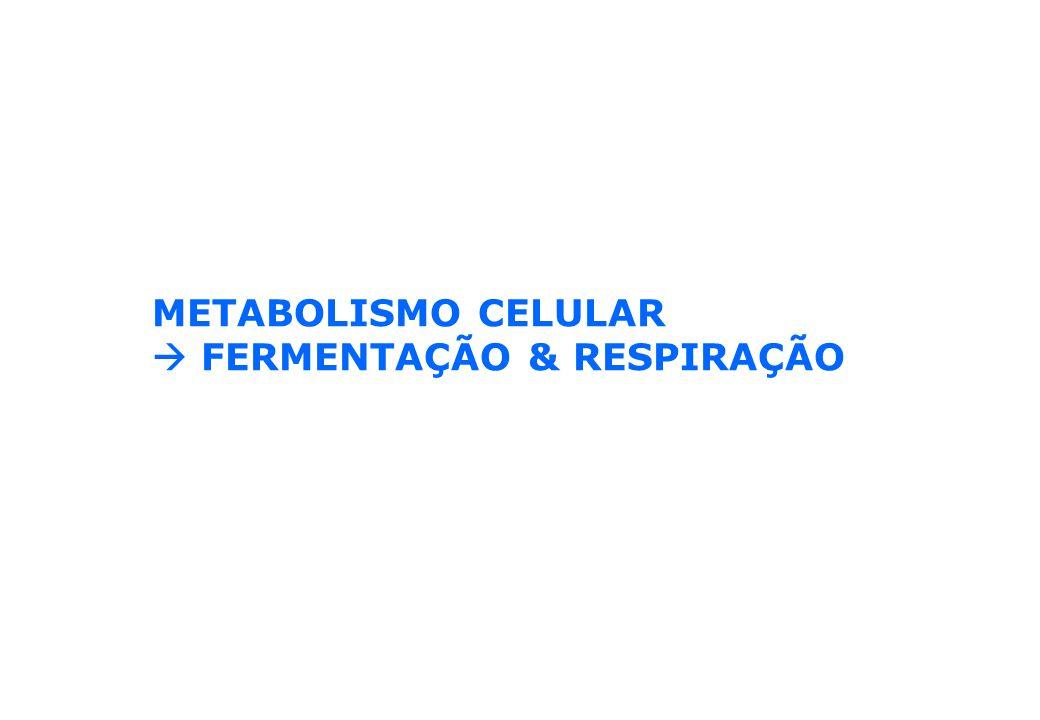 METABOLISMO CELULAR FERMENTAÇÃO & RESPIRAÇÃO