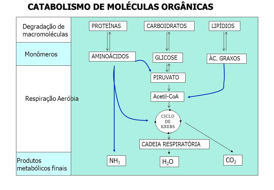 CATABOLISMO DE MOLÉCULAS ORGÂNICAS PROTEÍNASCARBOIDRATOSLIPÍDIOS AMINOÁCIDOS GLICOSE ÀC. GRAXOS PIRUVATO Acetil-CoA CICLO DE KREBS CADEIA RESPIRATÓRIA