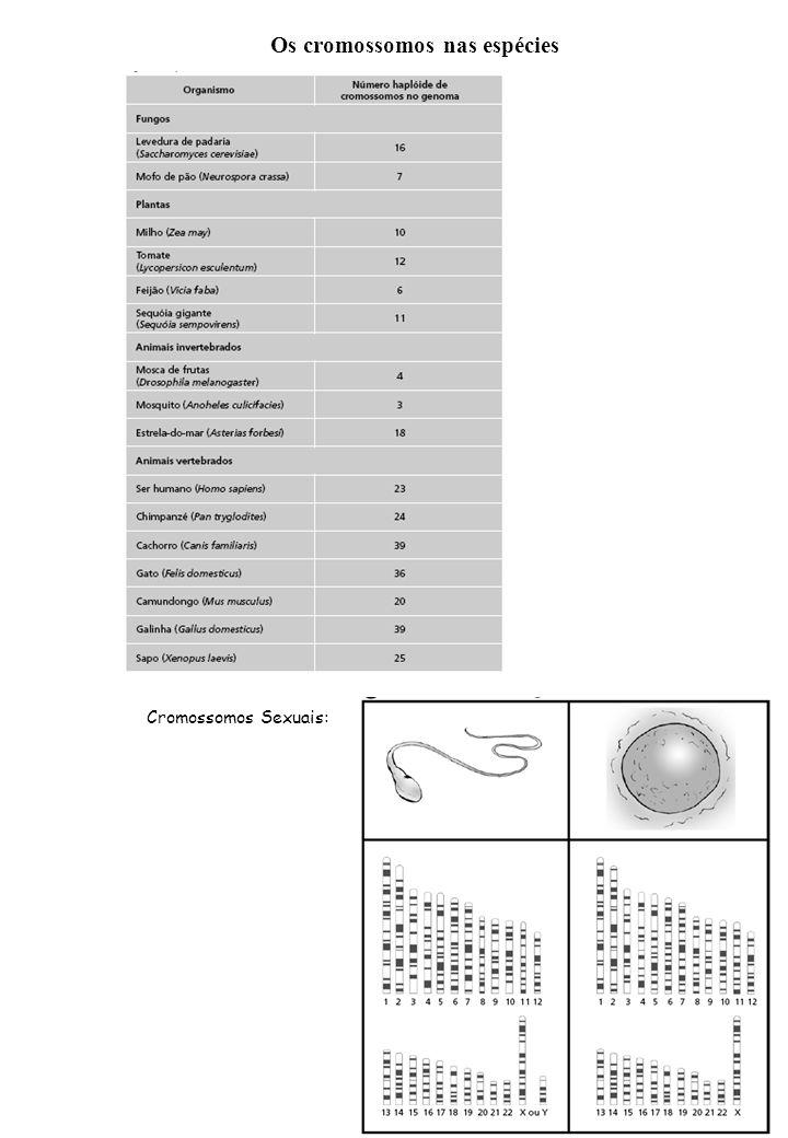 Os cromossomos nas espécies Cromossomos Sexuais:
