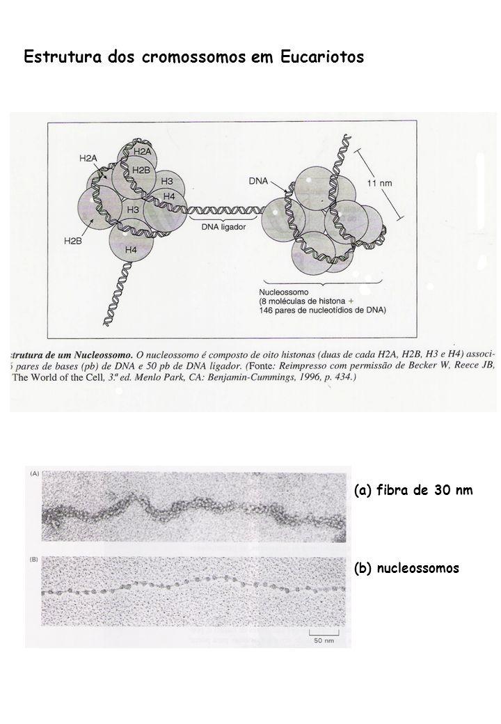 (a) fibra de 30 nm (b) nucleossomos