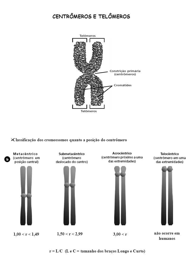 CENTRÔMEROS E TELÔMEROS Classificação dos cromossomos quanto a posição do centrômero r = L/C (L e C = tamanho dos braços Longo e Curto) 1,00 < r < 1,49 1,50 < r < 2,99 3,00 < r não ocorre em humanos