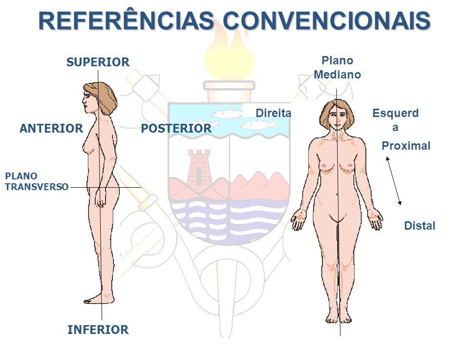 REFERÊNCIAS CONVENCIONAIS SUPERIOR POSTERIORANTERIOR PLANO TRANSVERSO INFERIOR Plano Mediano Proximal Distal DireitaEsquerd a