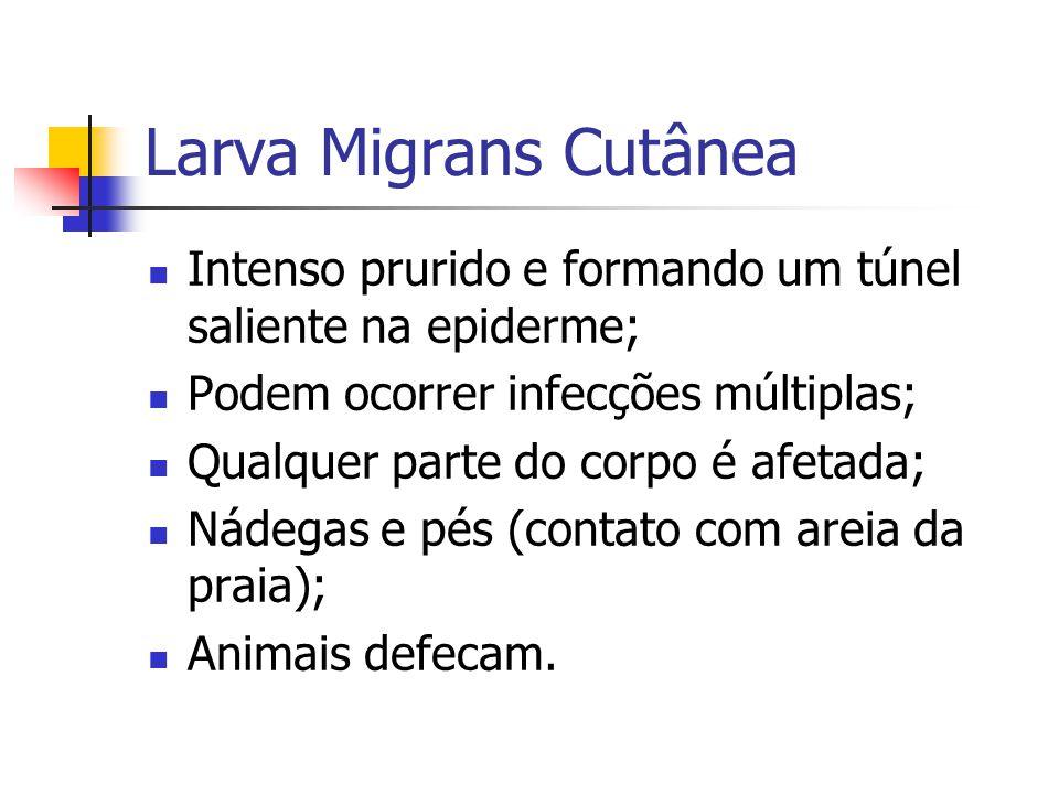 Larva Migrans Cutânea Intenso prurido e formando um túnel saliente na epiderme; Podem ocorrer infecções múltiplas; Qualquer parte do corpo é afetada; Nádegas e pés (contato com areia da praia); Animais defecam.