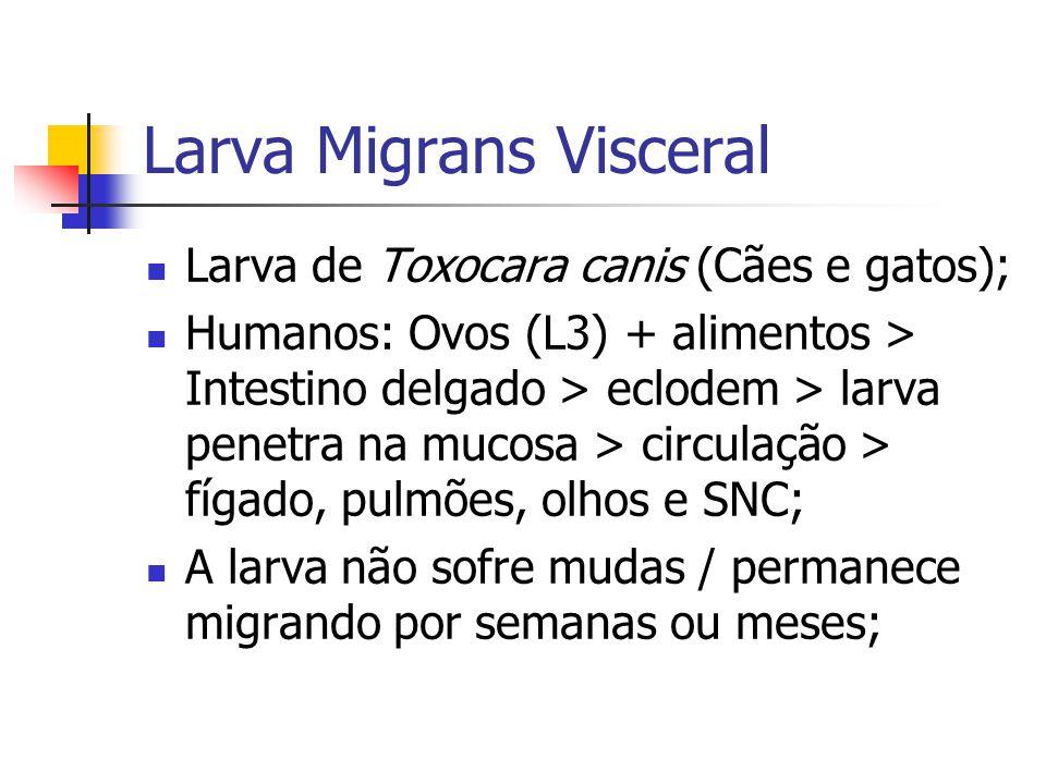 Larva Migrans Visceral Larva de Toxocara canis (Cães e gatos); Humanos: Ovos (L3) + alimentos > Intestino delgado > eclodem > larva penetra na mucosa