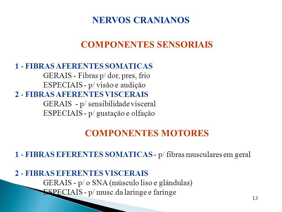 13 COMPONENTES SENSORIAIS 1 - FIBRAS AFERENTES SOMATICAS GERAIS - Fibras p/ dor, pres, frio ESPECIAIS - p/ visão e audição 2 - FIBRAS AFERENTES VISCER