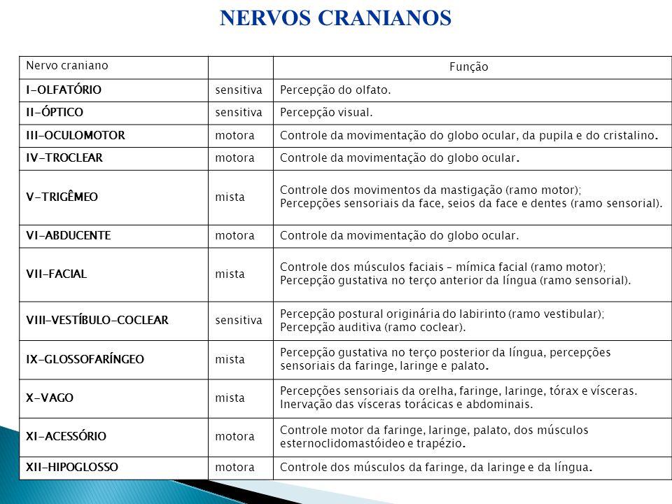 14 Nervo craniano Função I-OLFATÓRIOsensitivaPercepção do olfato. II-ÓPTICOsensitivaPercepção visual. III-OCULOMOTORmotoraControle da movimentação do
