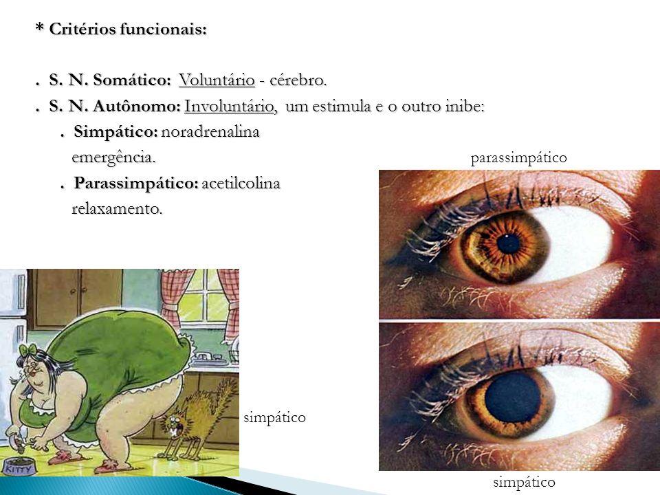 * Critérios funcionais:. S. N. Somático: Voluntário - cérebro.. S. N. Autônomo: Involuntário, um estimula e o outro inibe:. Simpático: noradrenalina e
