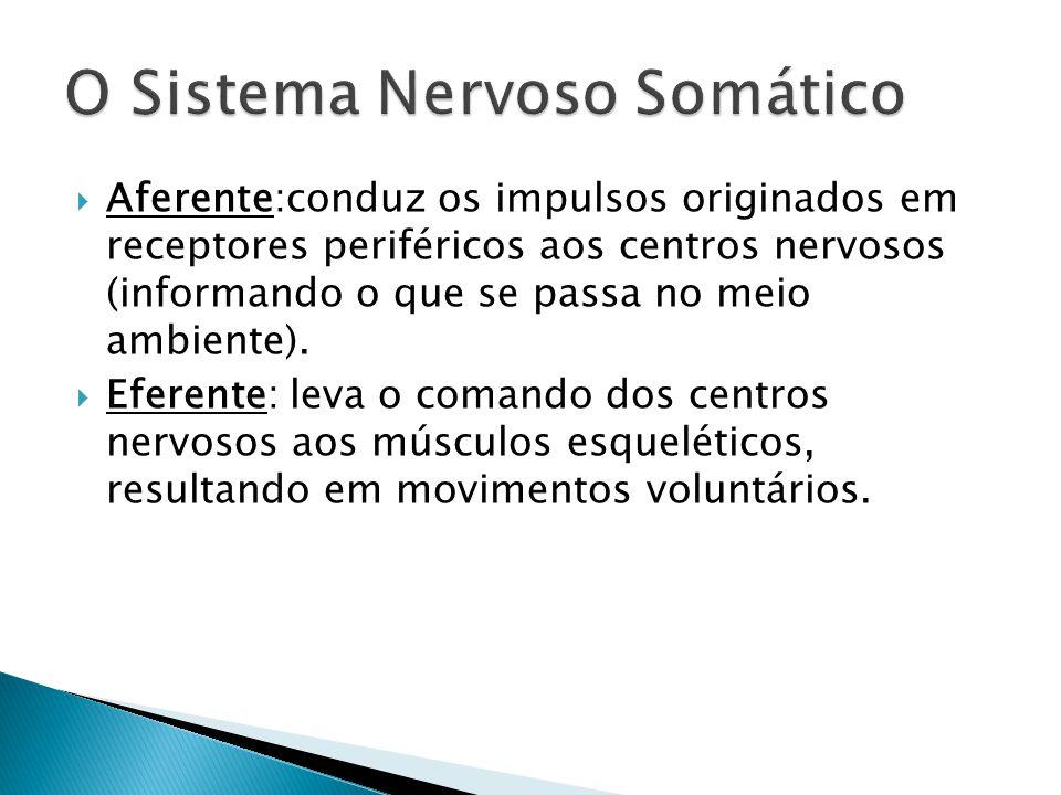 Aferente:conduz os impulsos originados em receptores periféricos aos centros nervosos (informando o que se passa no meio ambiente). Eferente: leva o c